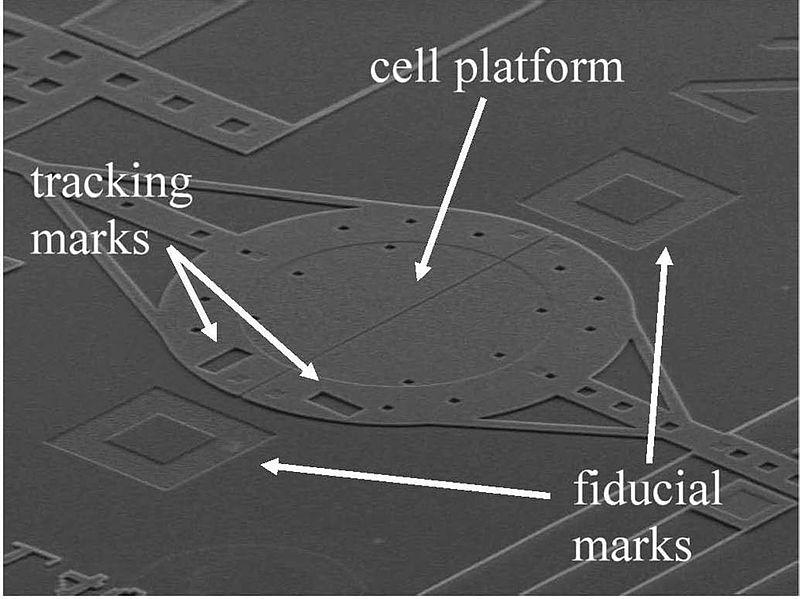 File:Microelectromechanical system (MEMS) (5880495531).jpg